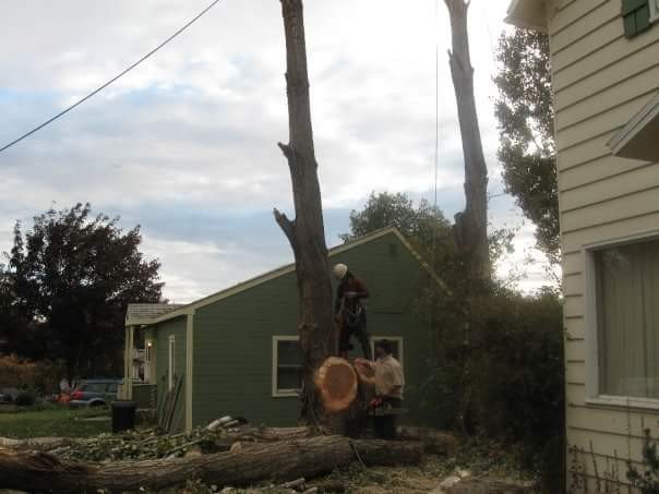 Removing a Tree near a house