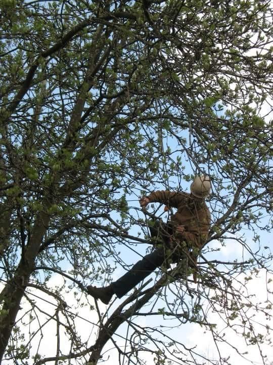 Tree Preservation Work In Redmond Or